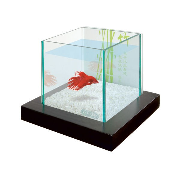 Aquarium aqua bamboo betta solo pour poisson combattant for Poisson combattant aquarium